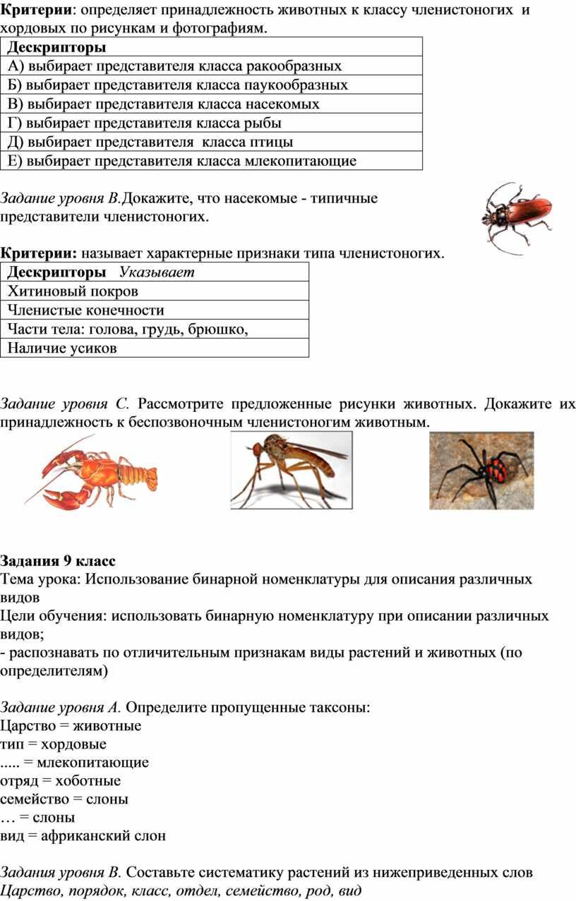 Критерии : определяет принадлежность животных к классу членистоногих и хордовых по рисункам и фотографиям