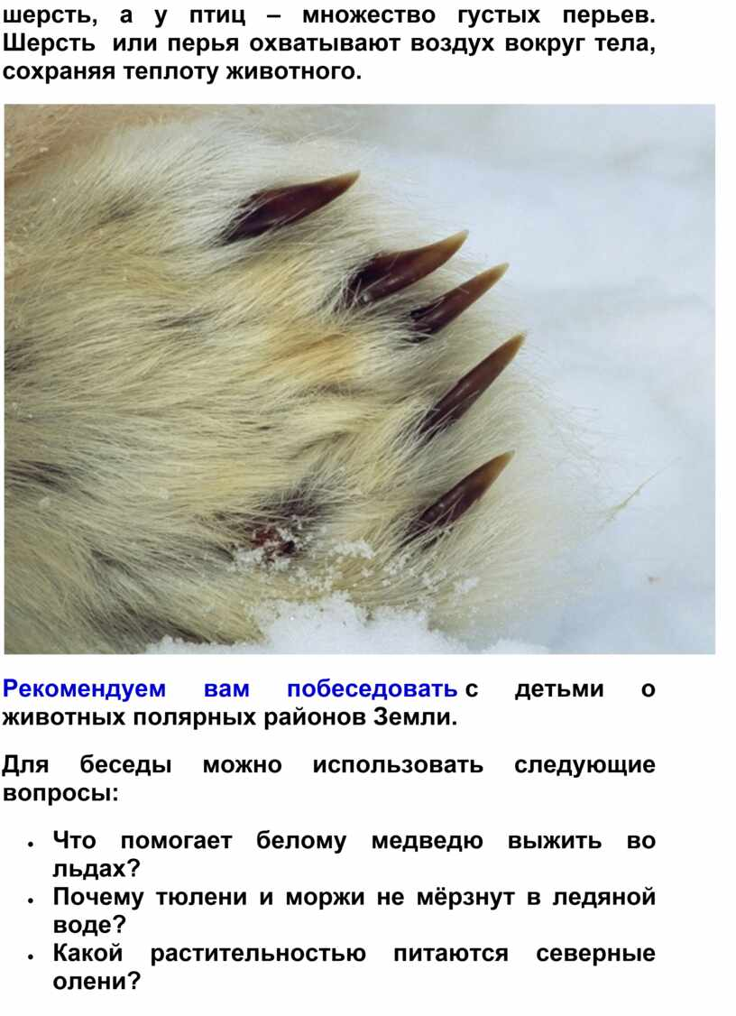 Шерсть или перья охватывают воздух вокруг тела, сохраняя теплоту животного