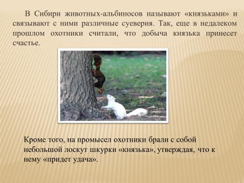 Альбинизм в животном мире