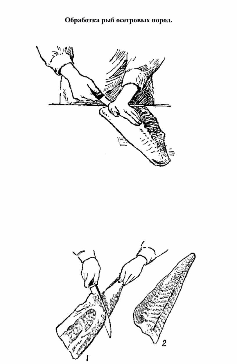 Обработка рыб осетровых пород