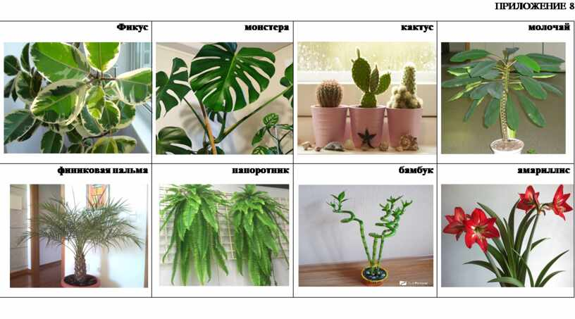 ПРИЛОЖЕНИЕ 8 Фикус монстера кактус молочай финиковая пальма папоротник бамбук амариллис