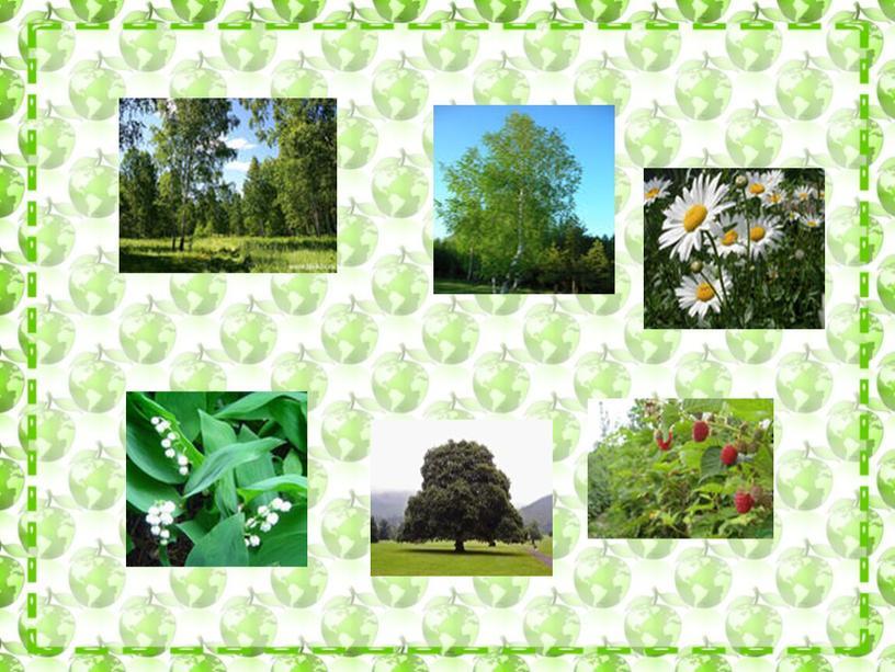 """Презентация по  окружающему миру :""""Деревья,кустарники,траы"""""""