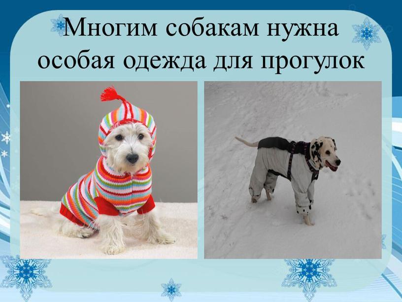 Многим собакам нужна особая одежда для прогулок