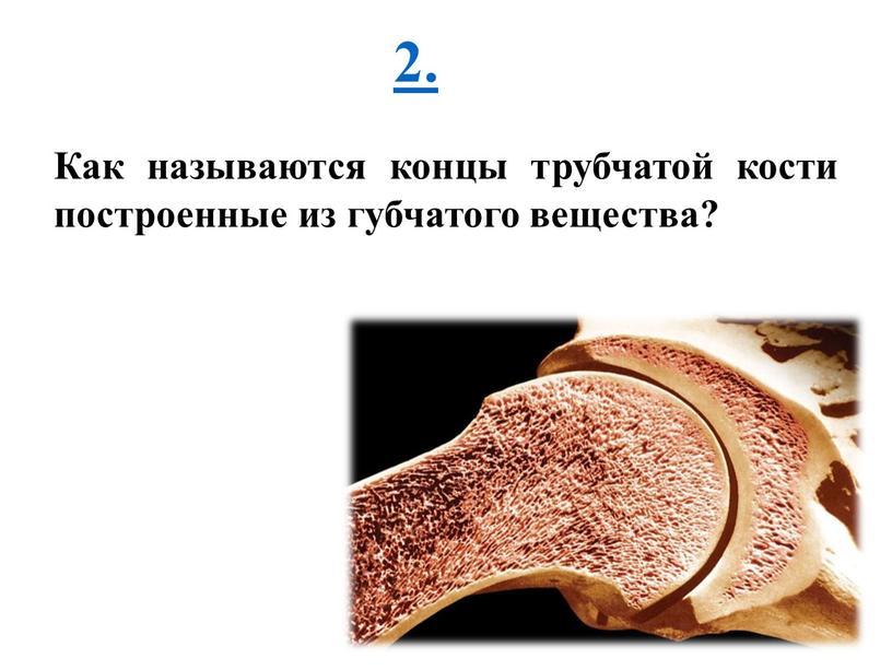 Как называются концы трубчатой кости построенные из губчатого вещества?