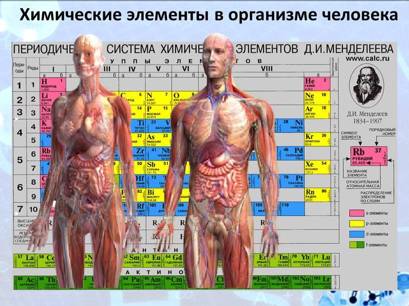 Химические элементы в организме человека