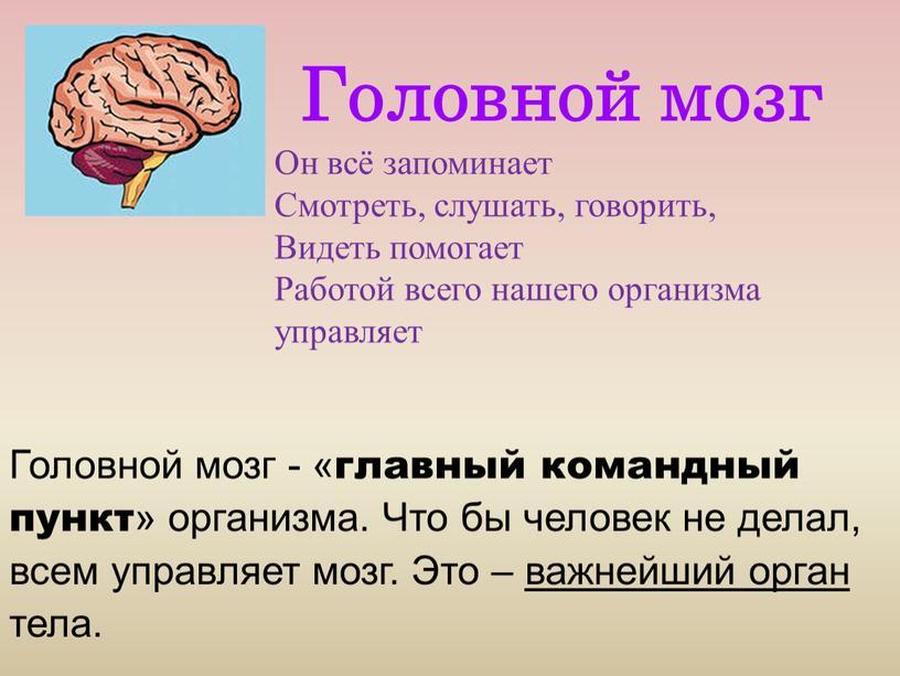 Головной мозг Он всё запоминает