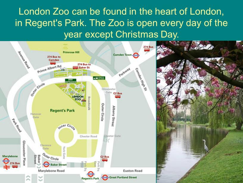 London Zoo can be found in the heart of