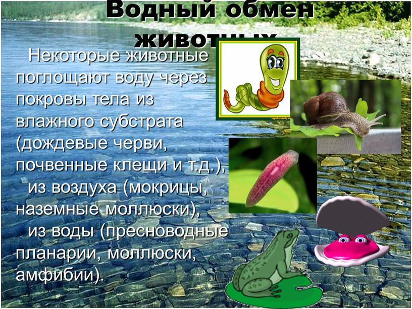 Водный обмен животных. Некоторые животные поглощают воду через покровы тела из влажного субстрата (дождевые черви, почвенные клещи и т