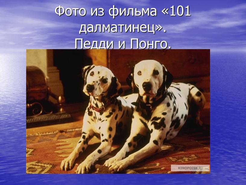 Фото из фильма «101 далматинец»