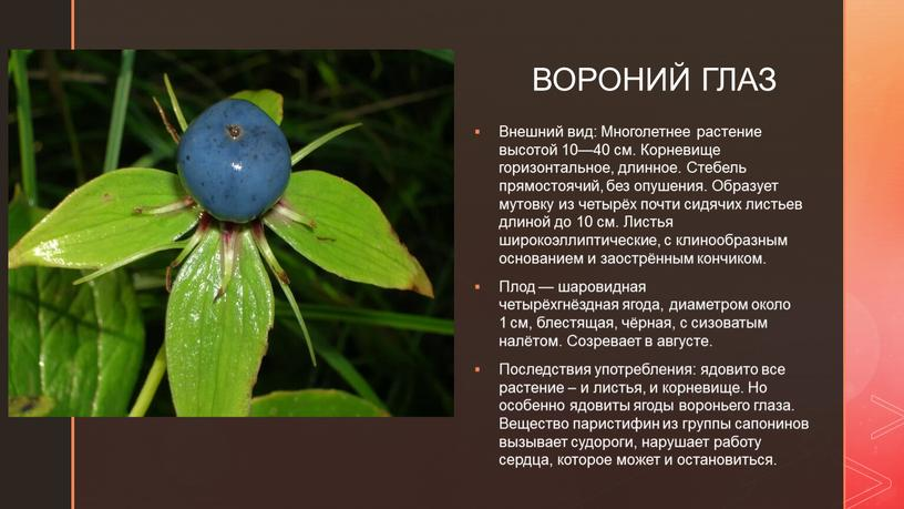 ВОРОНИЙ ГЛАЗ Внешний вид: Многолетнее растение высотой 10—40 см