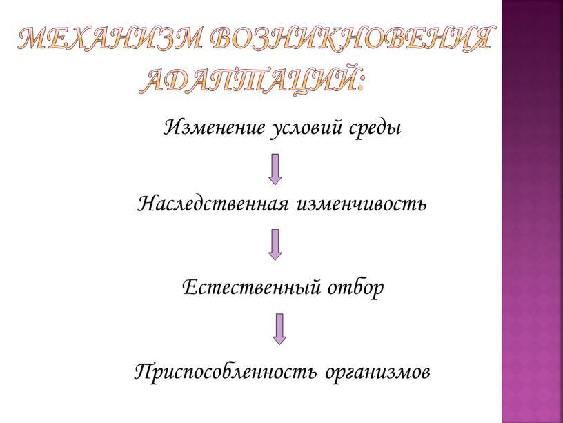 Механизм возникновения адаптаций:
