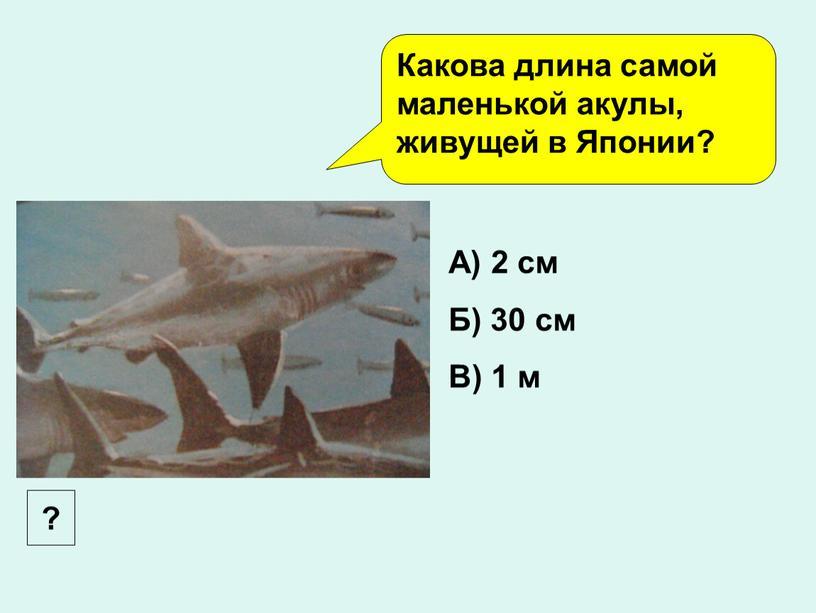 Какова длина самой маленькой акулы, живущей в