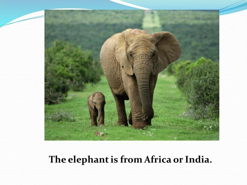 The elephant is from Africa or