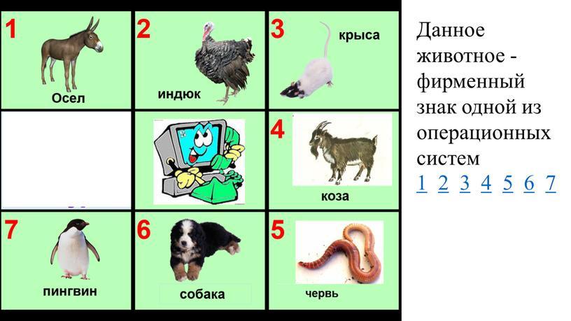 Данное животное - фирменный знак одной из операционных систем 1 2 3 4 5 6 7