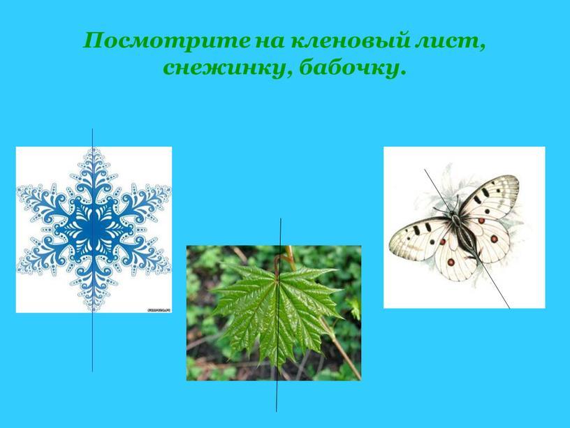 Посмотрите на кленовый лист, снежинку, бабочку