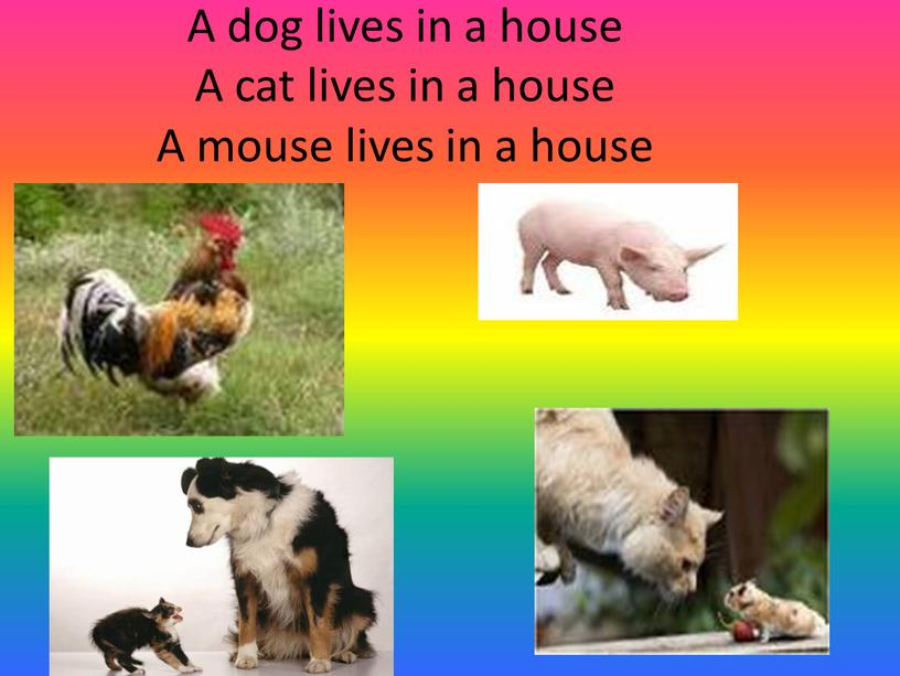 A dog lives in a house A cat lives in a house
