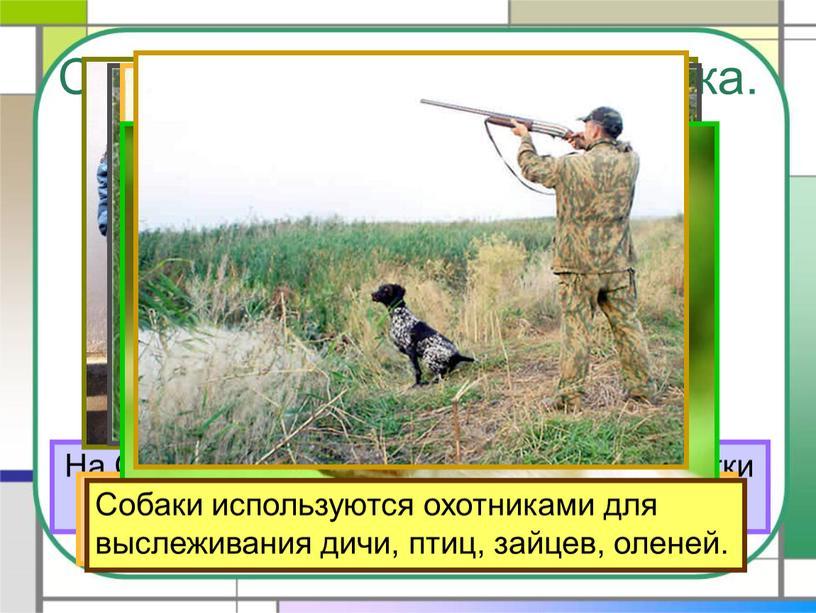 Собака – помощник человека. На