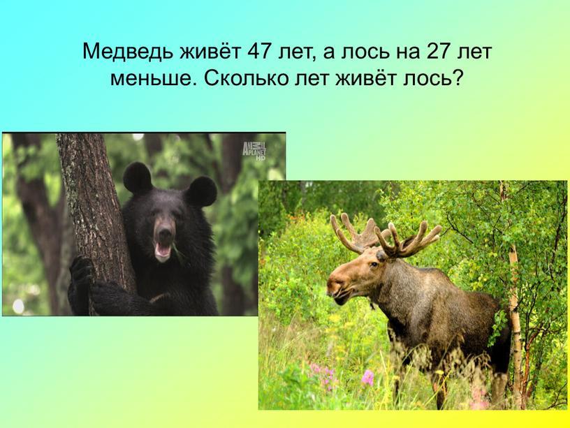 Медведь живёт 47 лет, а лось на 27 лет меньше