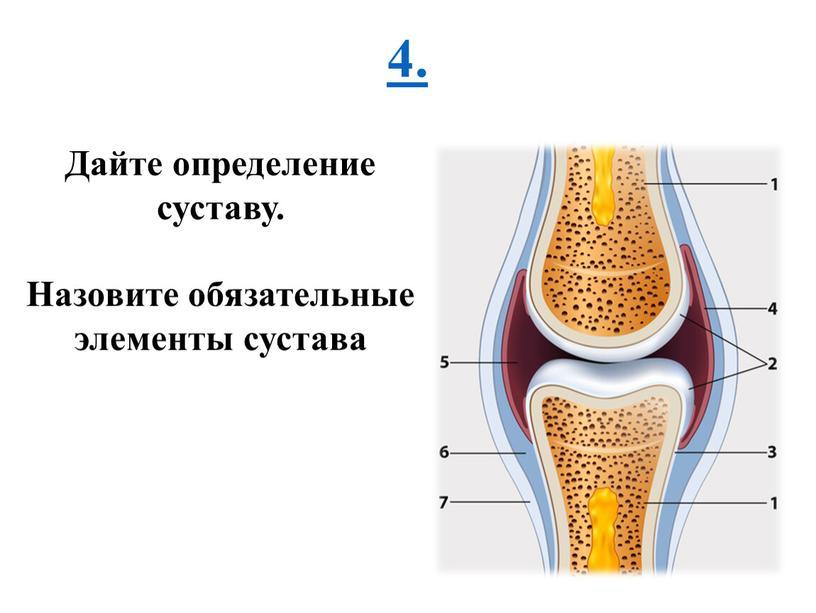 Дайте определение суставу. Назовите обязательные элементы сустава