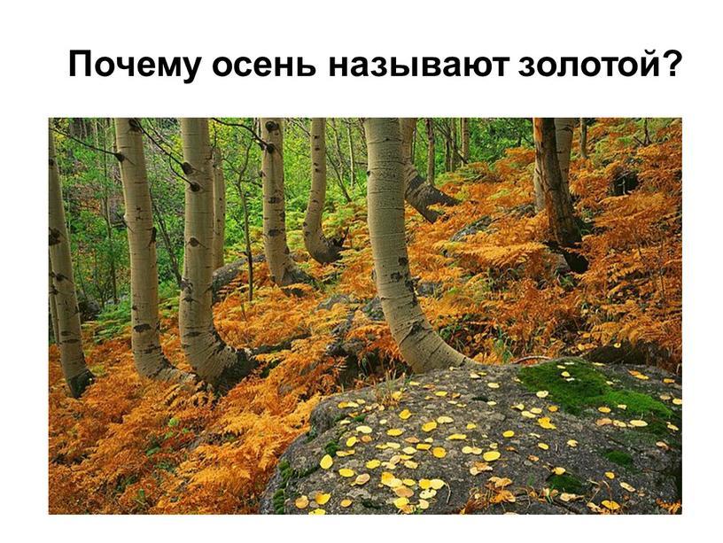 Почему осень называют золотой?