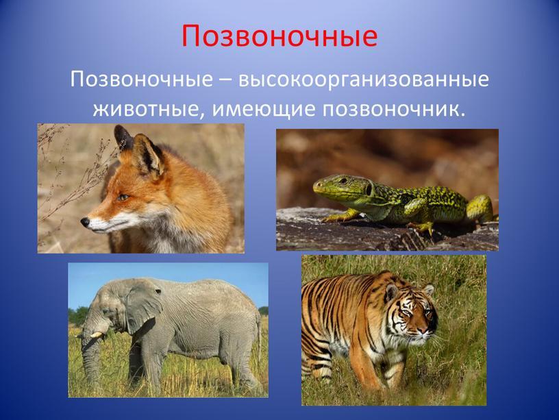 Позвоночные Позвоночные – высокоорганизованные животные, имеющие позвоночник