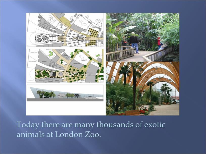 Today there are many thousands of exotic animals at