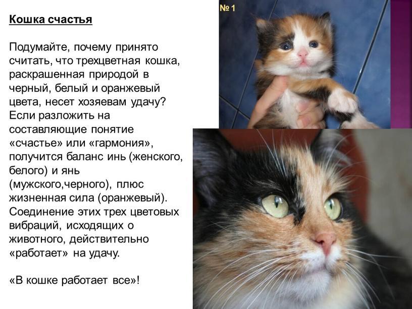 Кошка счастья Подумайте, почему принято считать, что трехцветная кошка, раскрашенная природой в черный, белый и оранжевый цвета, несет хозяевам удачу?