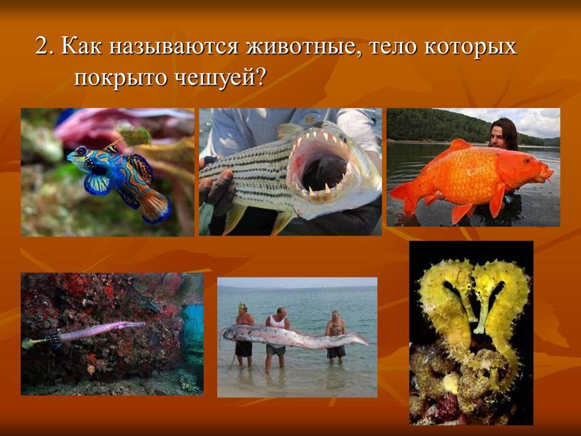 Как называются животные, тело которых покрыто чешуей?