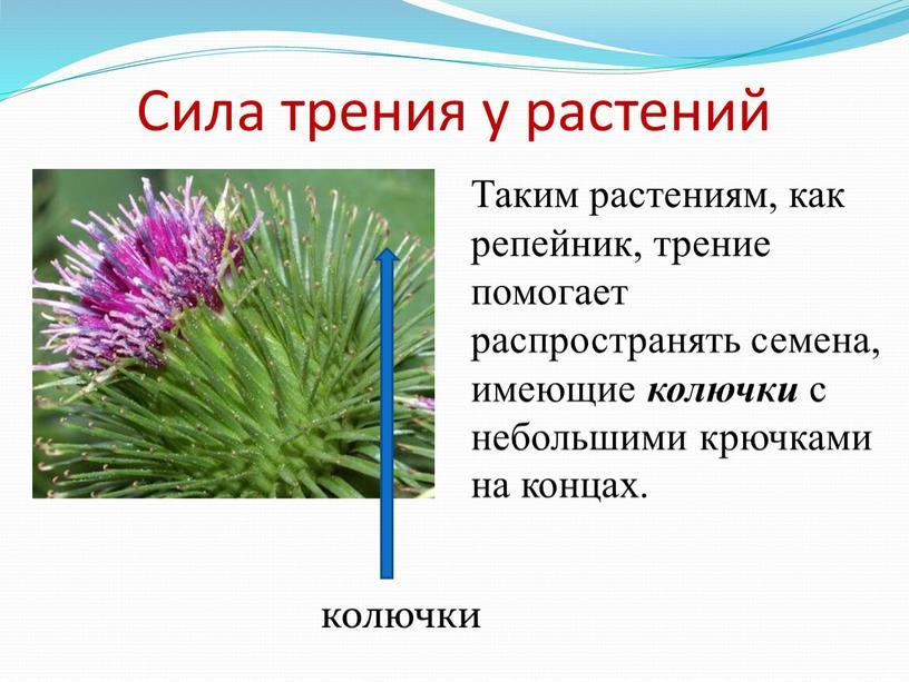 Сила трения у растений Таким растениям, как репейник, трение помогает распространять семена, имеющие колючки с небольшими крючками на концах