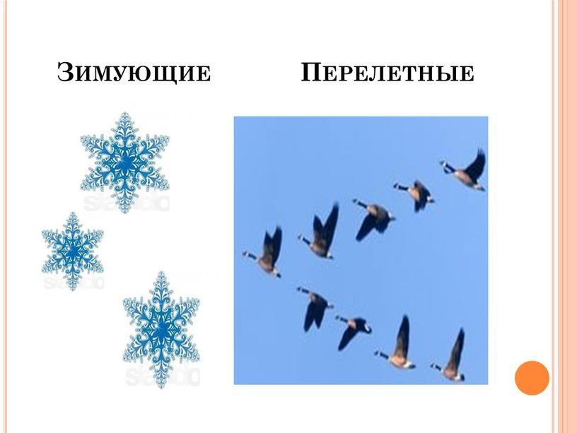 Зимующие Перелетные