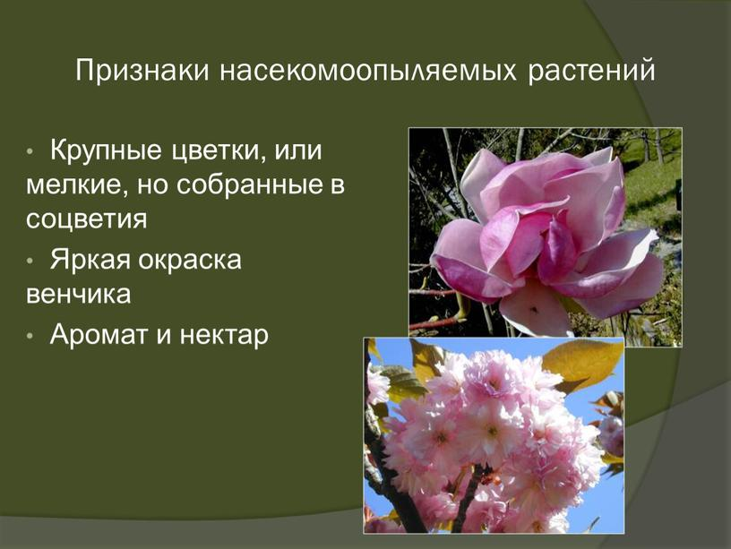 Признаки насекомоопыляемых растений