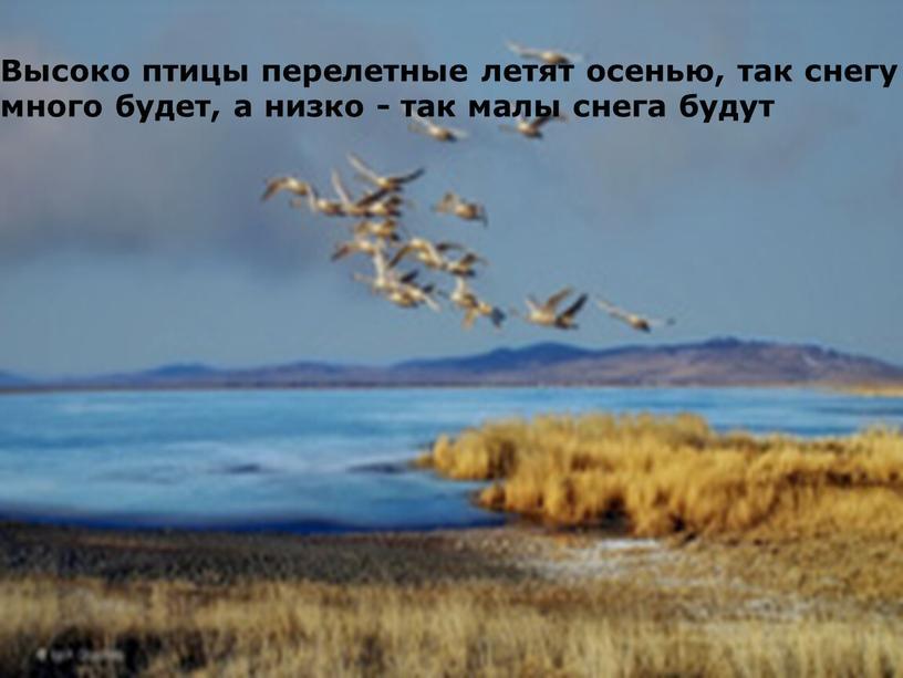 Высоко птицы перелетные летят осенью, так снегу много будет, а низко - так малы снега будут