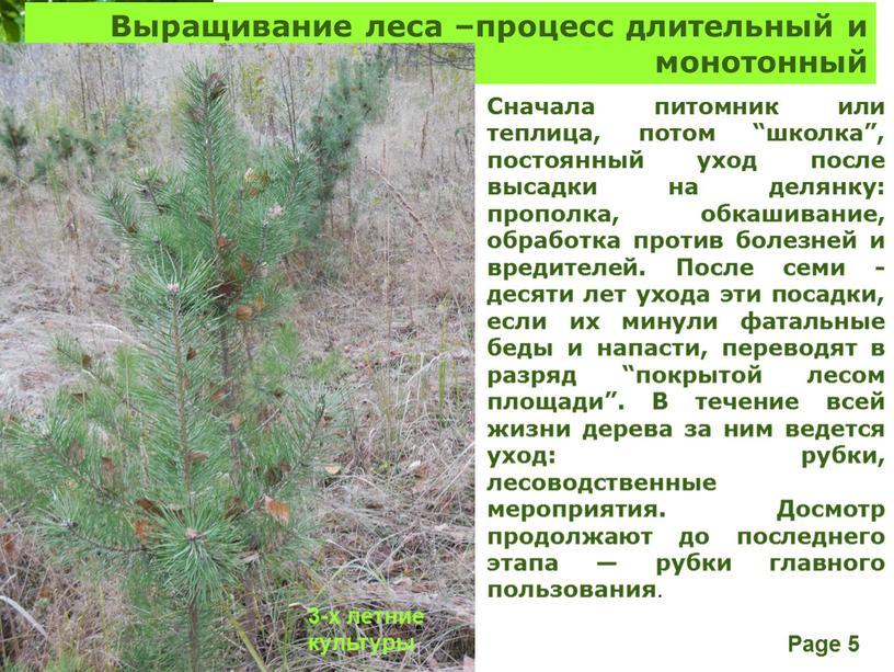 Выращивание леса –процесс длительный и монотонный 3-х летние культуры