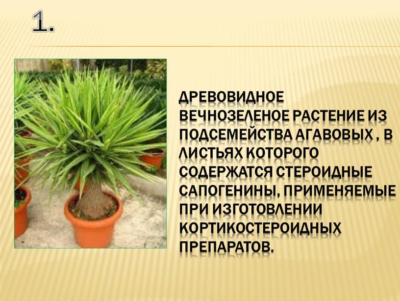 В листьях которого содержатся стероидные сапогенины, применяемые при изготовлении кортикостероидных препаратов