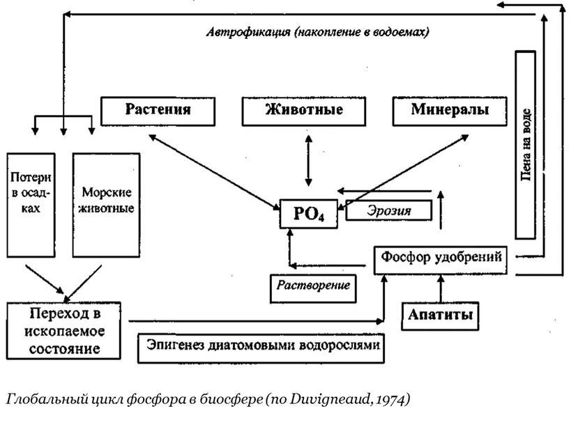 Глобальный цикл фосфора в биосфере (по