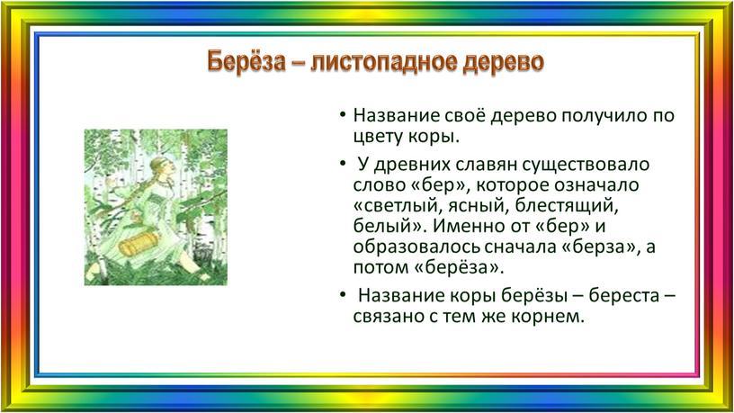 Берёза – листопадное дерево Название своё дерево получило по цвету коры