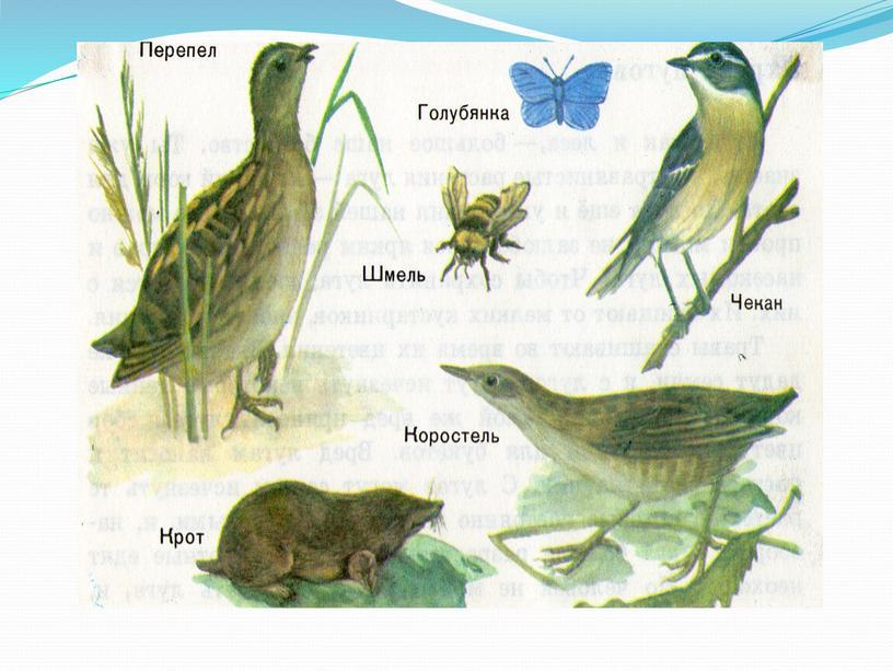 """Презентация  по окружающему миру   """"Почему луг называют природным сообществом""""(2 класс )"""