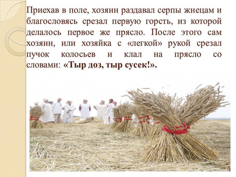 Приехав в поле, хозяин раздавал серпы жнецам и благословясь срезал первую горсть, из которой делалось первое же прясло