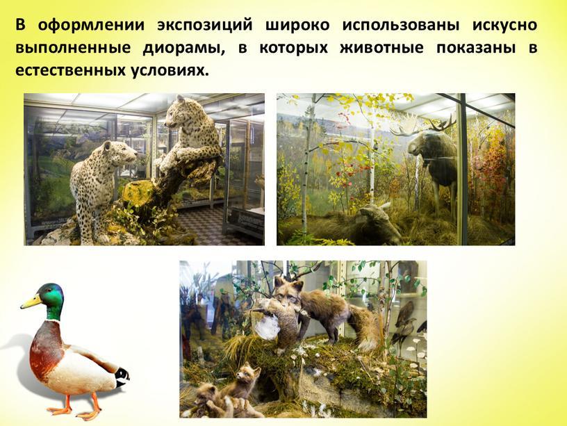 В оформлении экспозиций широко использованы искусно выполненные диорамы, в которых животные показаны в естественных условиях