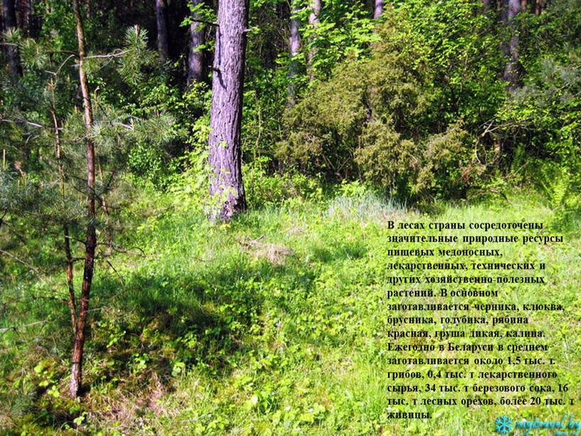 В лесах страны сосредоточены значительные природные ресурсы пищевых медоносных, лекарственных, технических и других хозяйственно-полезных растений