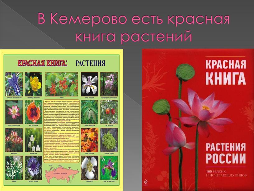 В Кемерово есть красная книга растений