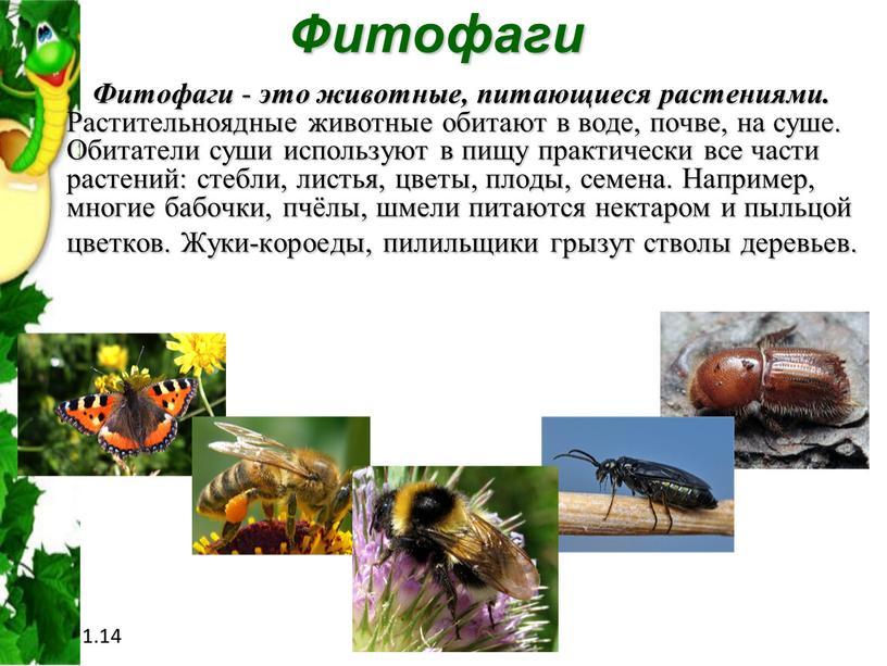 Фитофаги Фитофаги - это животные, питающиеся растениями