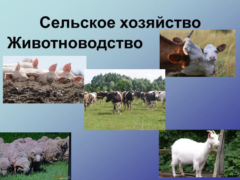 Сельское хозяйство Животноводство