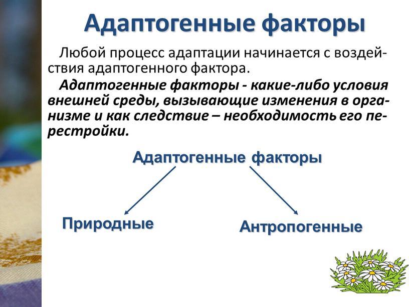 Адаптогенные факторы Любой процесс адаптации начинается с воздей-ствия адаптогенного фактора