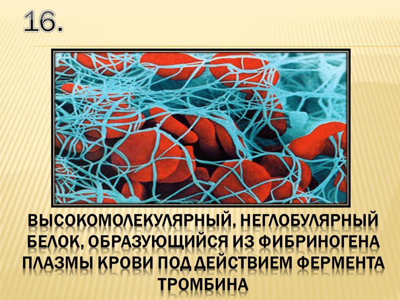 16. высокомолекулярный, неглобулярный белок, образующийся из фибриногена плазмы крови под действием фермента тромбина