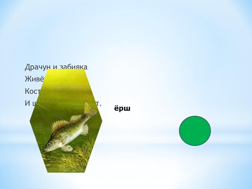 Драчун и забияка Живёт в воде,