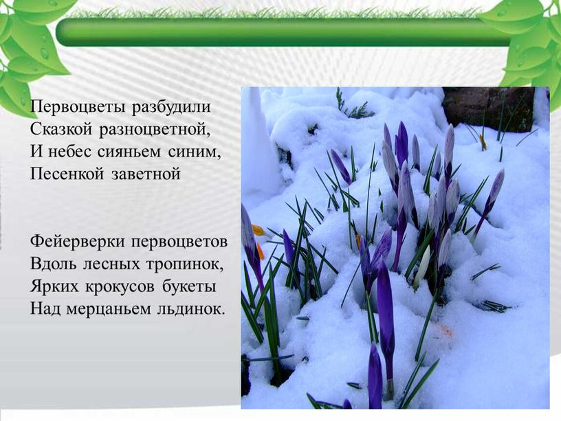 Первоцветы разбудили Сказкой разноцветной,