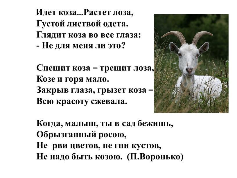 Идет коза…Растет лоза, Густой листвой одета