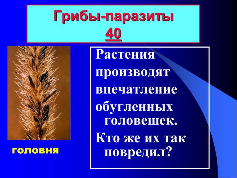 Растения производят впечатление обугленных головешек