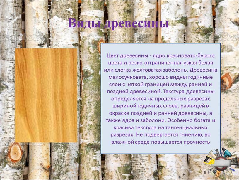 Виды древесины Цвет древесины - ядро красновато-бурого цвета и резко отграниченная узкая белая или слегка желтоватая заболонь